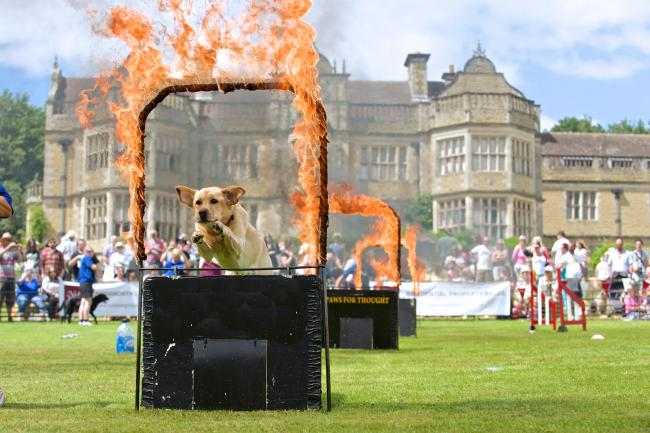 Out door dog photography Stokesay Court  Dog Show Event Photography.