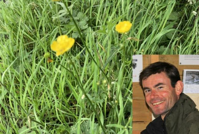 UNDER THREAT: Daisies growing in wild grassland and (inset) Steven Bloomfield,