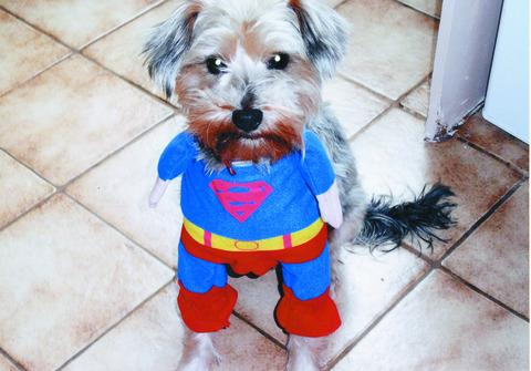 Jacko, in his Superman outfit.