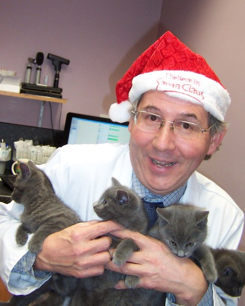 Vet Rory Lydon with some Christmas kittens