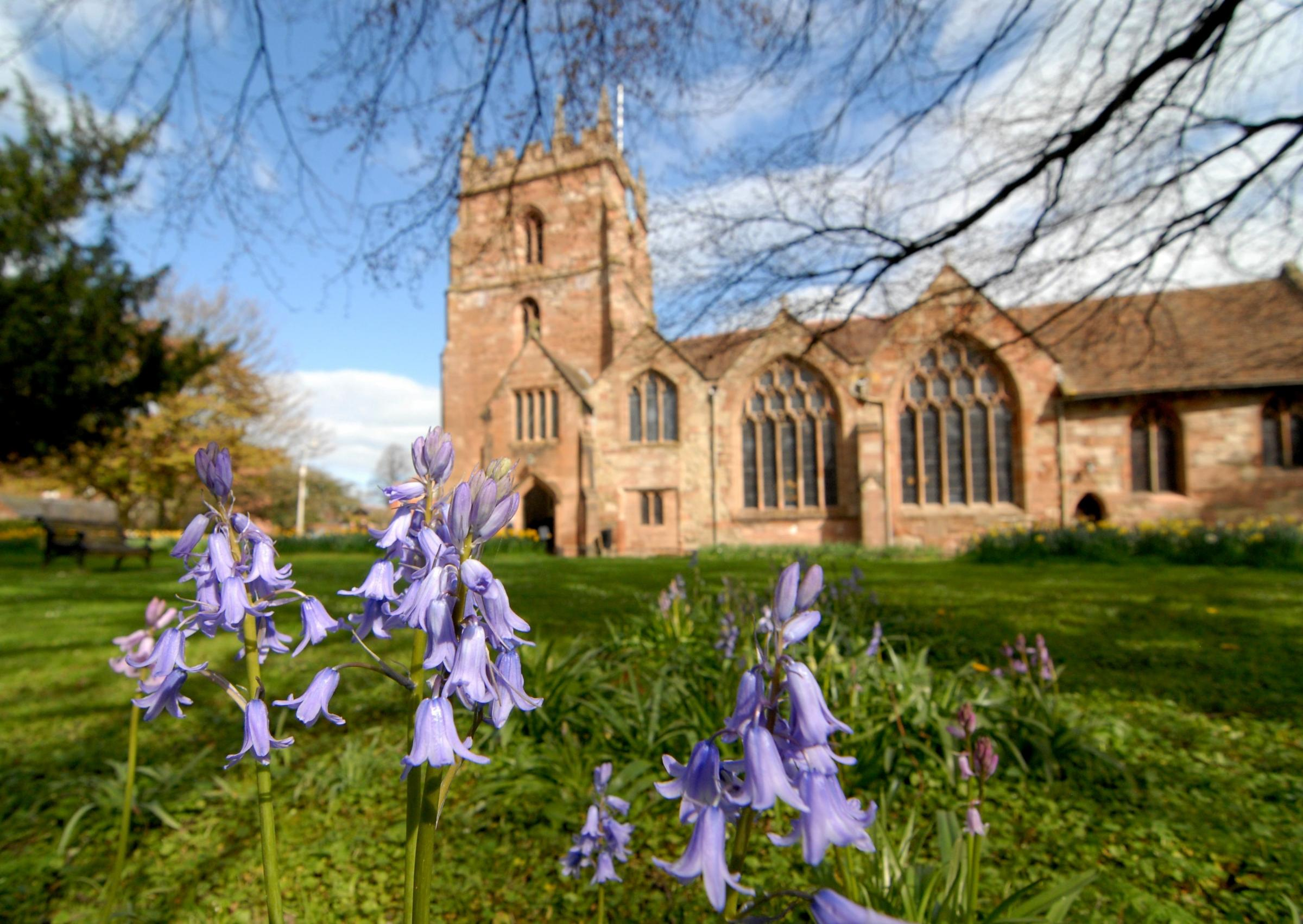 1514573401. 13/04/14. Bluebells in the grounds of St John in Bedwardine church. Picture by Nick Toogood. (5377740)