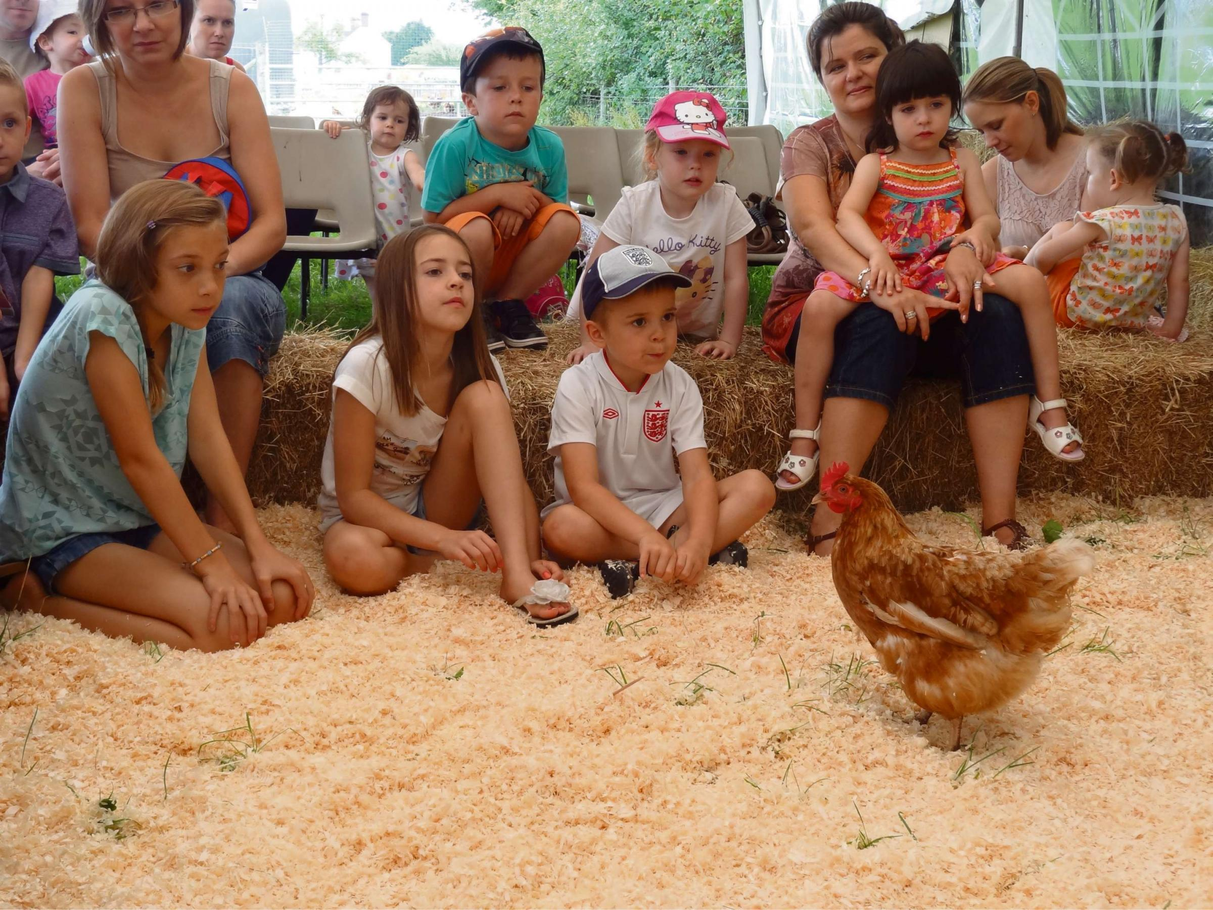 Visitors get friendly with the chickens at Stables Farm in Astwood Bank.