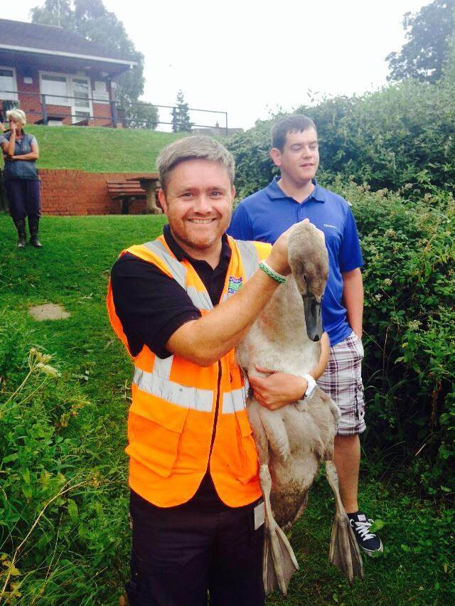 Lee Birch from Severn Trent helps rescue one of the signets. SP