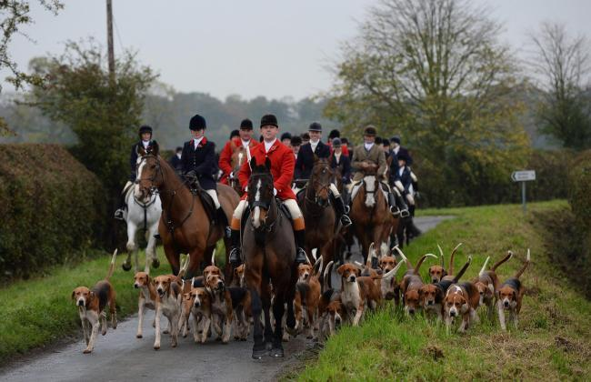 We want to hear your views about fox hunting.